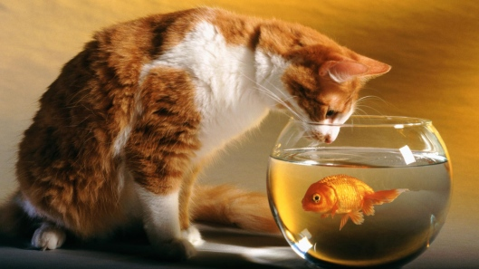 cat-and-fish-hd